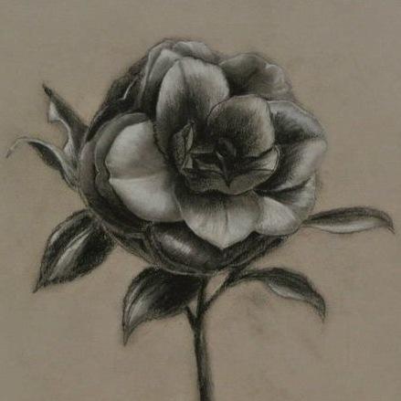 畫一枝茶花
