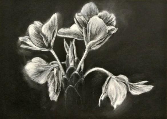 drawgingerflowers