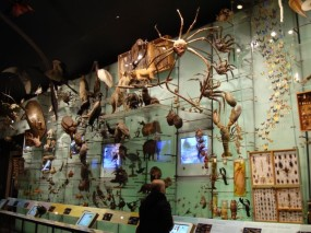 AMNH-biodiversity