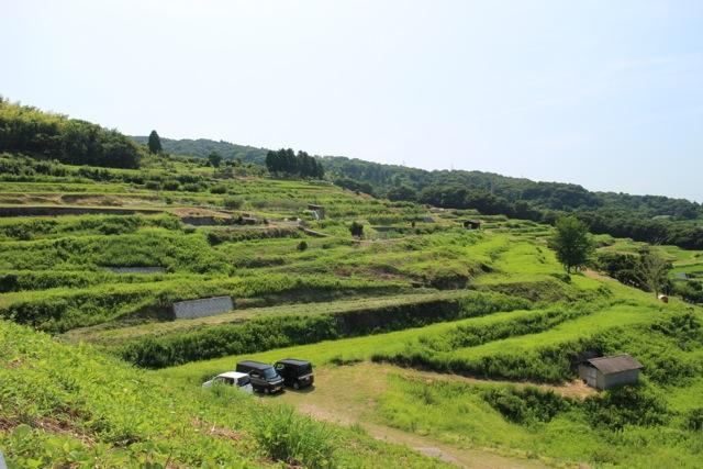 teshima1